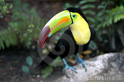 Toucan in Zoo