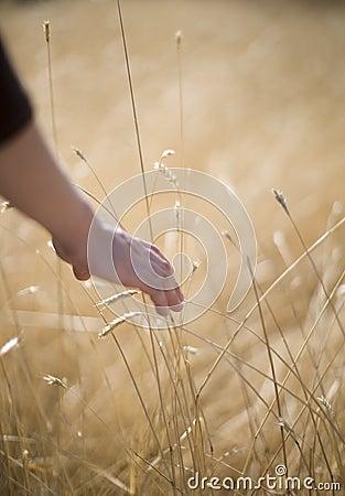 Touching wheat