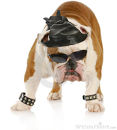 Tough biker dog