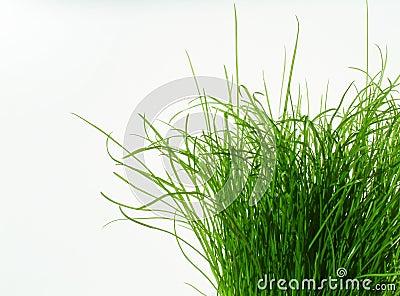 Toujours plus vert