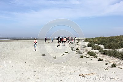tour guests on the sandbar Editorial Photo
