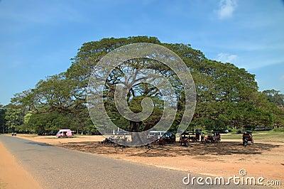 Tourism of Cambodia