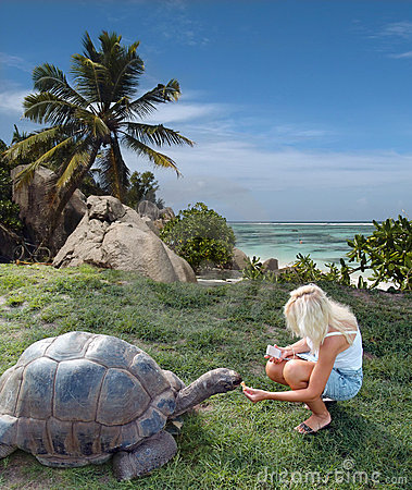 Tourist is feeding giant turtle.