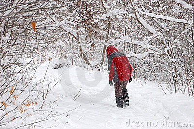 Tourist walking alone in winter forest
