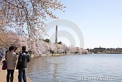 Tourists at Cherry Blossom Festival