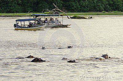 Tourists watching hippos Editorial Photography