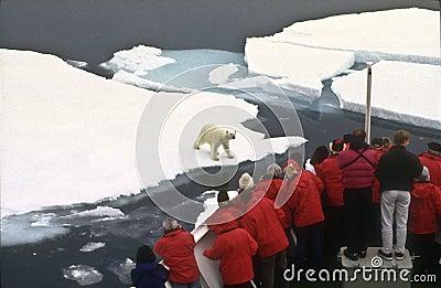 Tourists Watching a Polar Bear Editorial Stock Photo