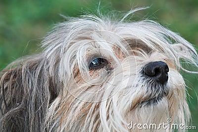 Tousled dog