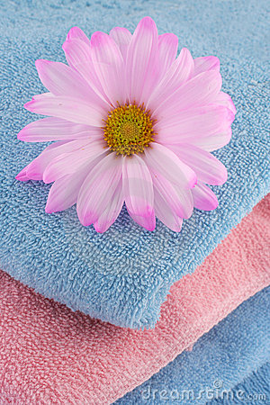 Towels and daisy