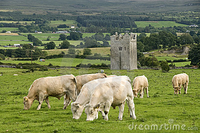 Tower in Ireland with cows