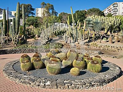 Town Centre Cactus Garden Spain