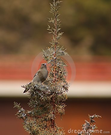 Townsend s Solitaire