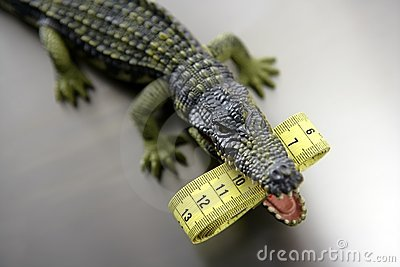 Toy aligator, centimeter tape measure
