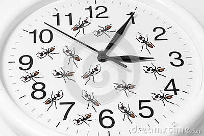 Toy Ants on Clock