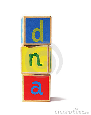 Toy building blocks – dna