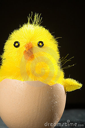Toy Chick in Egg Shell