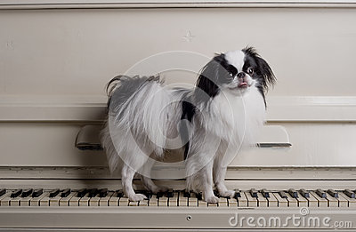 Toy dog on piano