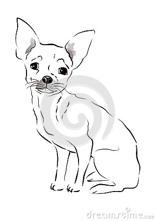 Toy Terrier. sketch
