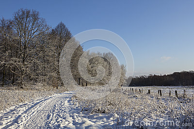 Träd och fält i vinter