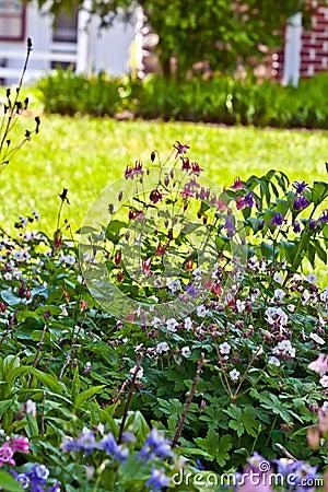 Trädgårds- home perenn