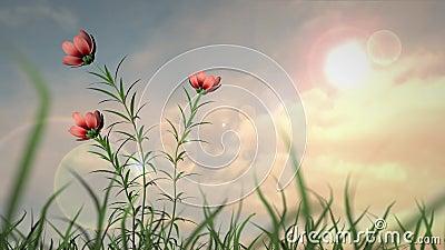 trädgårds- sommar för blomningblommor lager videofilmer