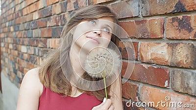 Träumerisches Mädchen mit flaumigem großem Löwenzahn auf dem Hintergrund der Wand des roten Backsteins, schönen des junge Frau sm stock video