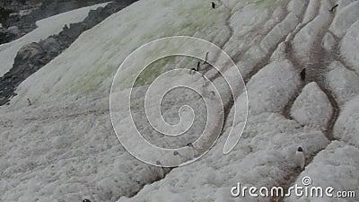 Traînées dans la neige piétinée par les pingouins qui vont de la colonie à l'eau banque de vidéos