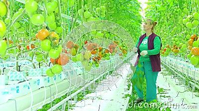 Trabajador de sexo femenino en invernadero almacen de metraje de vídeo