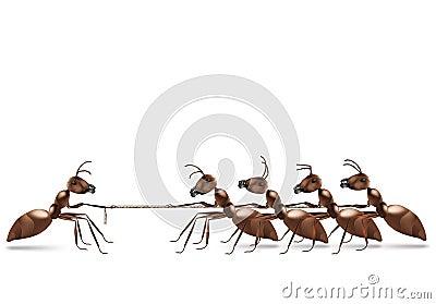 Tracción de la cuerda de la hormiga