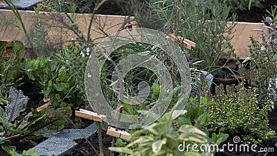 Tracciamento di una scatola di piante e di flora in crescita stock footage