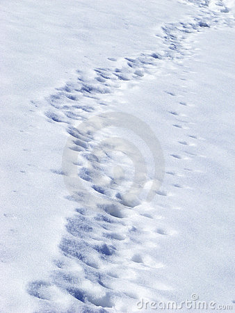 Free Traces In Snow Stock Photography - 15490672
