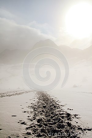 Free Traces In Winter Snow Royalty Free Stock Image - 36841186
