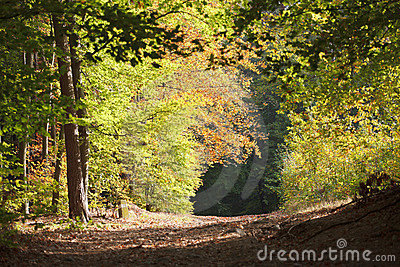 TRACK THROUGH AUTUMNAL FOREST