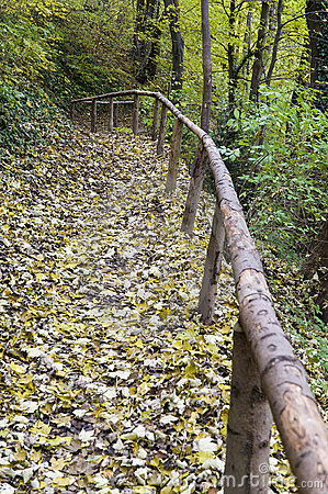 Track through forest