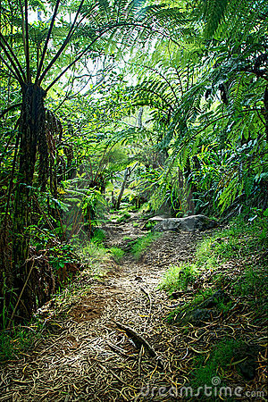 Track through jungle