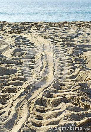 Track of tortoise