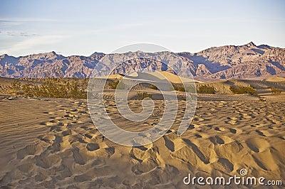 Tracks across the dunes
