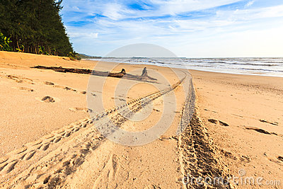 Tracks on the golden sand