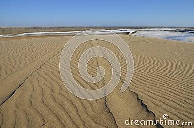 Tracks on a sand dune.