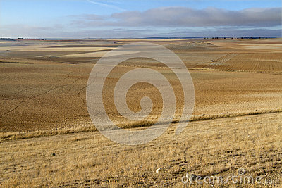 Tractor - field