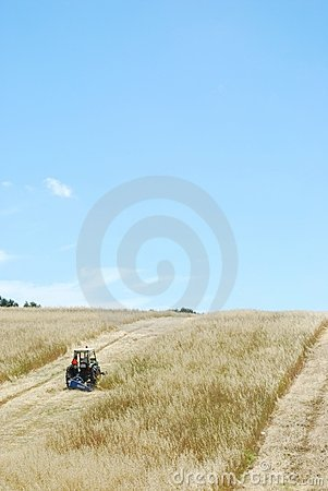 Tractor harvesting wheat field