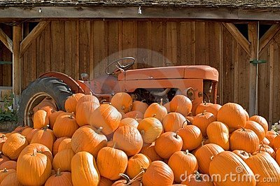 Tractor and pumpkins