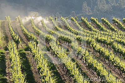 Tractor Spraying in Vineyard