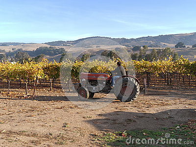 Tractor working out in the vineyard Editorial Stock Image