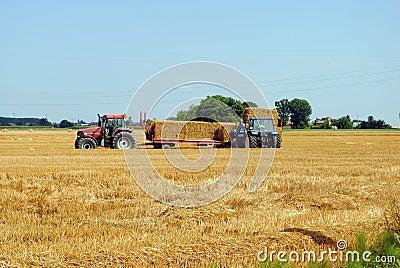 Tractors load bales of hay