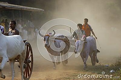 Traditional Bullock Cart Race