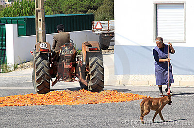 Traditional corn grinding in Portuguese village Editorial Photography