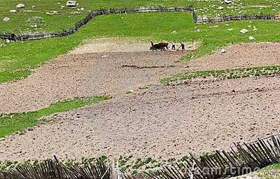 Traditional farming. Upper Svaneti. Georgia.