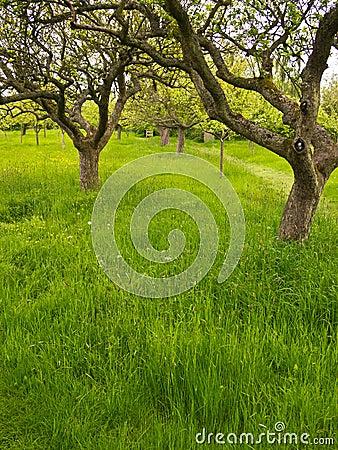 Orchard Garden in England