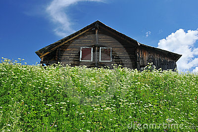 Traditional swiss log cabin in meadow with flowers